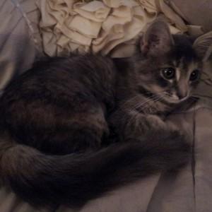 Gretel @ 3.5 months.